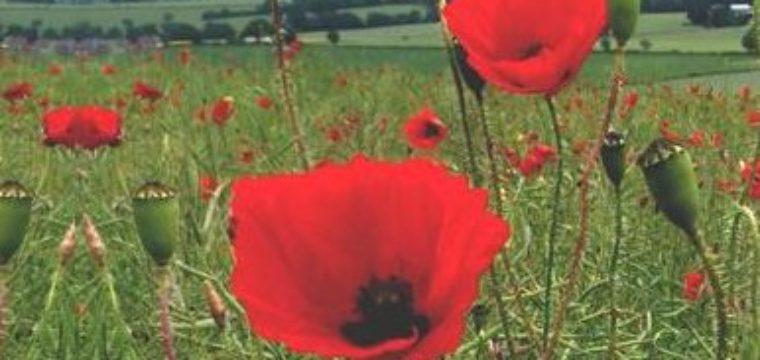 Remembrance Service (8 November 2020)